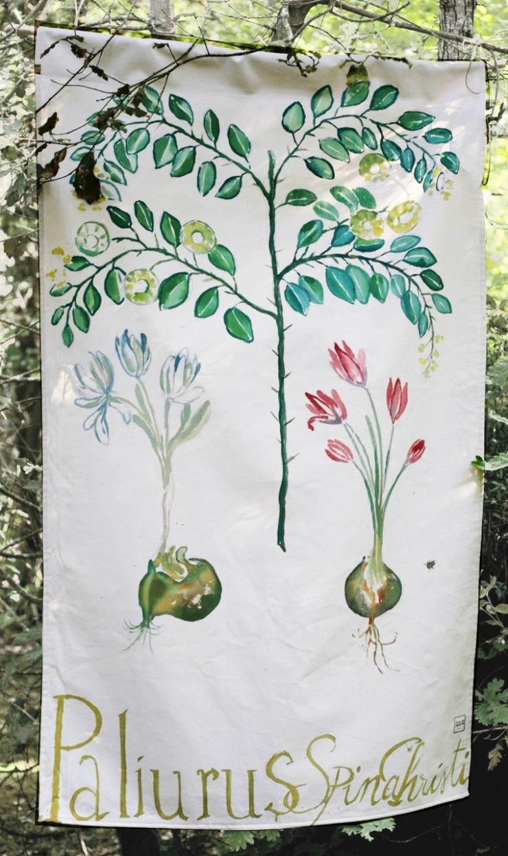 7-herbier