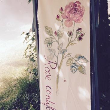rose centifolia2bis